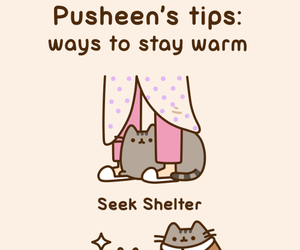 cat, pusheen, and warm image