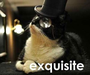 cat, exquisite, and funny image
