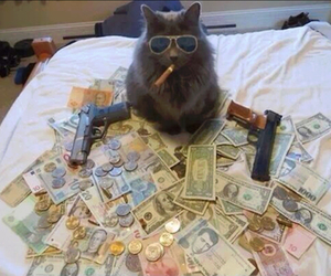cat, money, and gun image