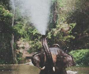 beatiful, forest, and elephant image
