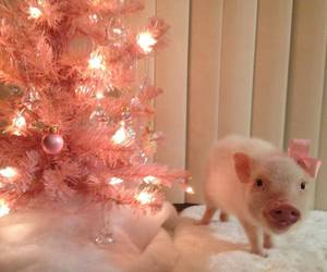 adorable, lights, and pig image