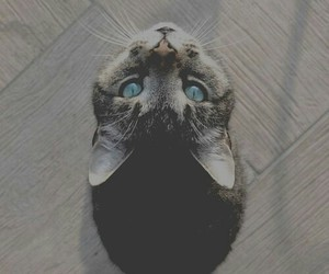 cats, kity, and lovely image