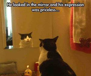 cat, funny, and expression image