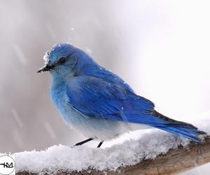 cute, bird, and snow image
