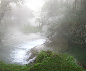 foggy, nature, and pale image