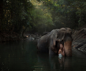 nature, love, and elefant & woman image