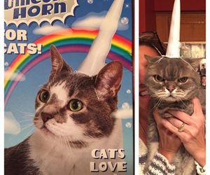 cat, unicorn, and funny image