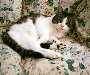 cat, gatinho, and gato image