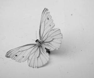 butterfly, beautiful, and animal image