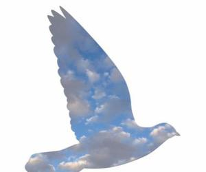 bird, clouds, and pretty image