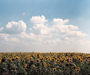 flowers, clouds, and sunflower image