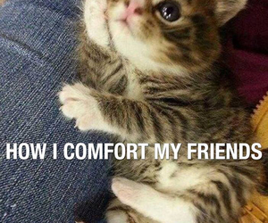 cat, friends, and comfort image