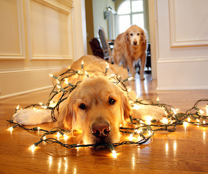 chien, christmas, and lumiere image