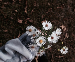 flowers, grunge, and beautiful image