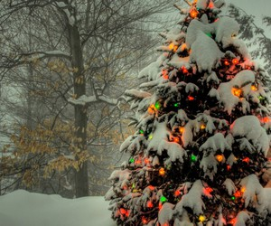 christmas tree, forrest, and lights image