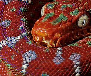 theme, snake, and rp image