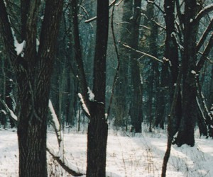 winter, forest, and indie image