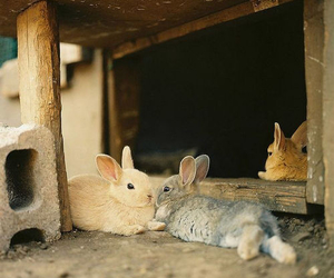bunny, cute, and sweet image