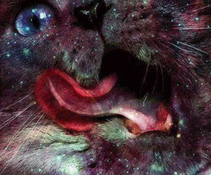 cat and galaxy image