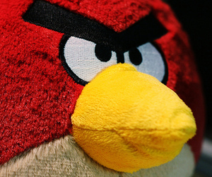 angry birds, photography, and tumblr image