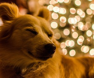 dog, cute, and lights image