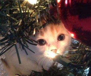 cats, christmas, and decorations image