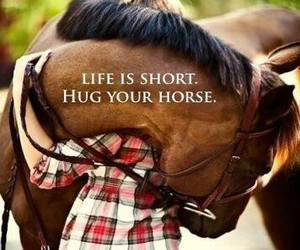 horse, hug, and life image