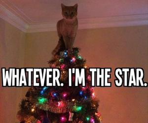 cat, star, and christmast image