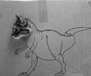 alternative, black and white, and cat image
