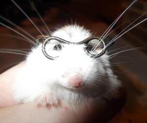 animal, glasses, and hamster image