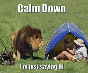 lion, funny, and hi image