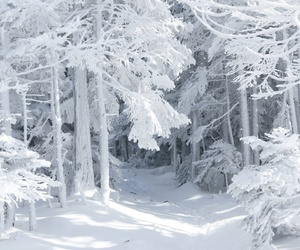 snow, forest, and white image