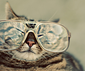cat and glasses image