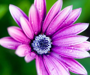 cool, flower, and nature image