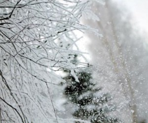 christmas, paradise, and snow image
