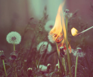 fire, flowers, and burn image