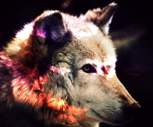 edit, wolves, and galaxy image