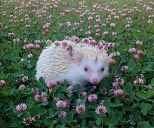 animal, flowers, and hedgehog image