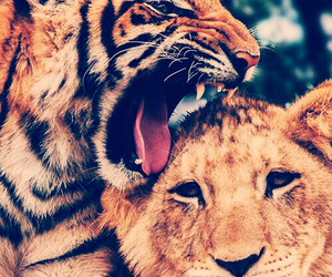 animals, tiger, and couple image