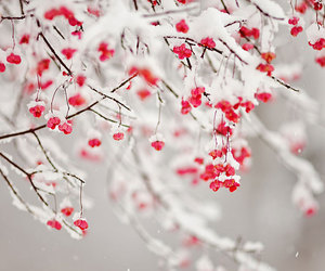 red, white, and winter image