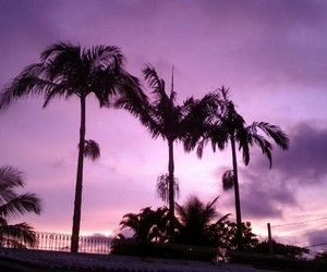 beach, purple, and sky image