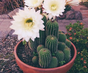 cactus, flower, and plants image