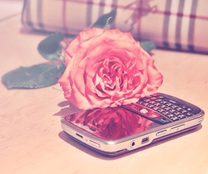 rose, blackberry, and pink image