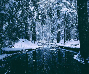 tree, forest, and snow image