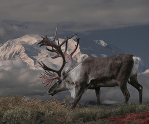 caribou, mountains, and snow image