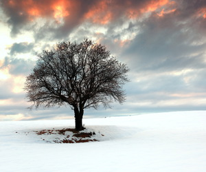 snow, sunset, and tree image