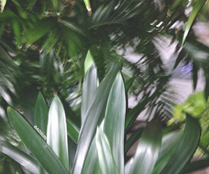 grunge, leaves, and plants image