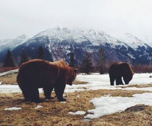 bear, snow, and nature image