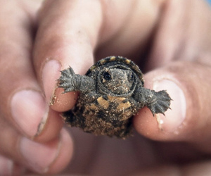 turtle, baby, and animal image