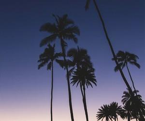 palms, beach, and sky image